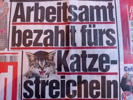 Bildzeitung: Arbeitsamt bezahlt fürs Katze-Streicheln
